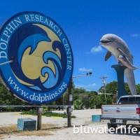 dolphin research center ~ #flkeys