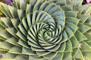 Spiralling twists