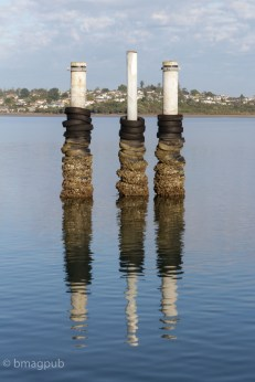 Piles near HMB boat ramp