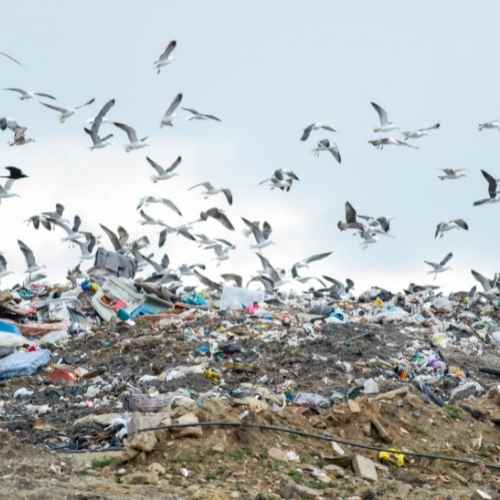 landfill trash scavenger birds rubbish plastic bottles and dirty cans