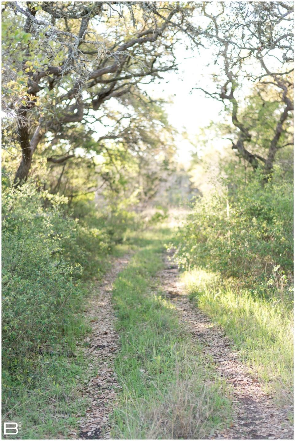 Kingwood Photographer image of wooded path