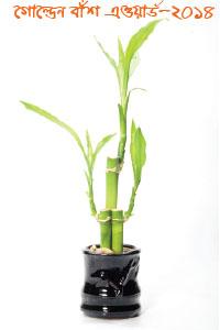 golden-bamboo-award-dhallywood