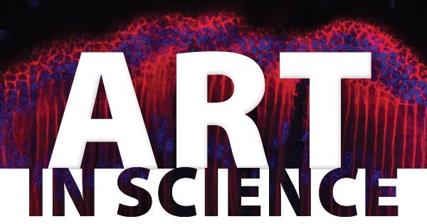 Art in Science logo