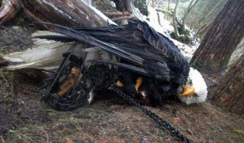 Wildlife Services Fails to Protect Life