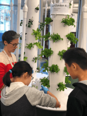 Librarian Meghan Dolan helps Middle School students water the tower garden. Photo By Sita Alomran '19.