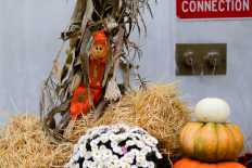 The Harvest season is upon us with only two weeks until Thanksgiving.