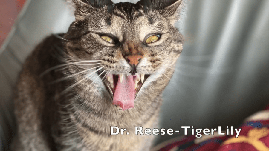 Humanities Department Co-Chair Donald Reese captured his cat's exhaustion.