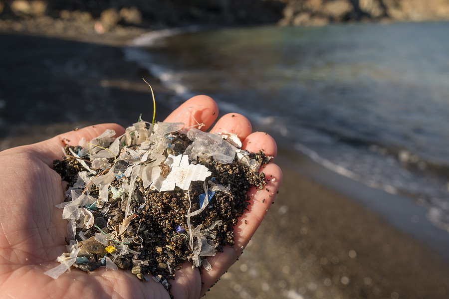 Environmental Panel Discusses Ocean Health
