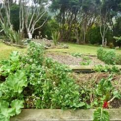 Rhubarb, parsley, coriander and chard
