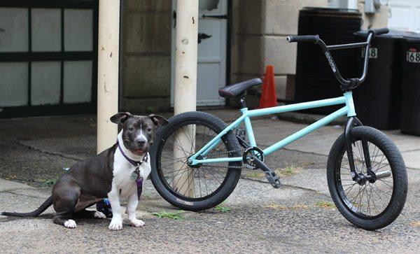 dan-conway-bmx-bike-check