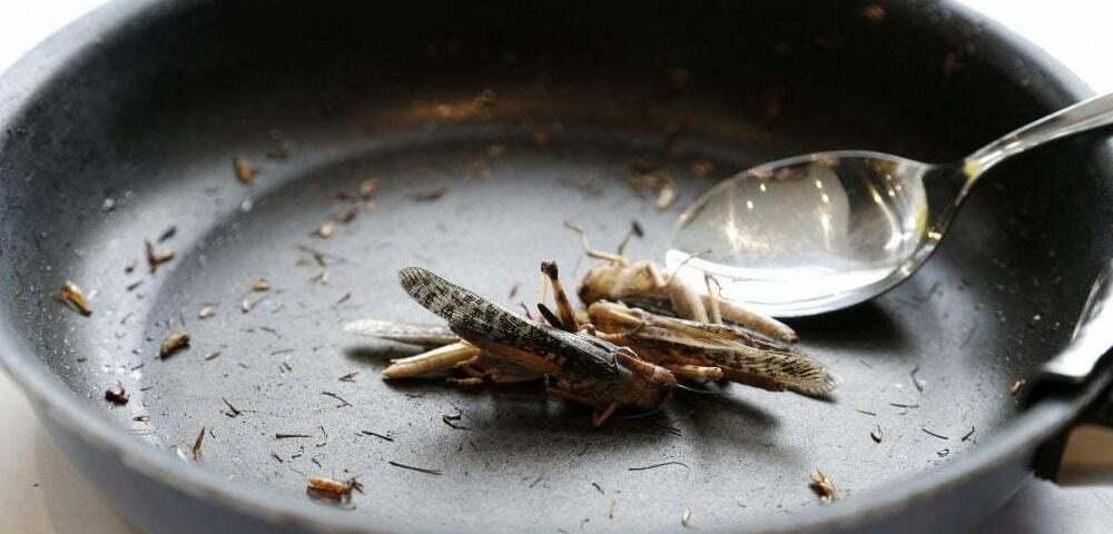 Съедобные насекомые - основные правила употребления насекомых в пищу