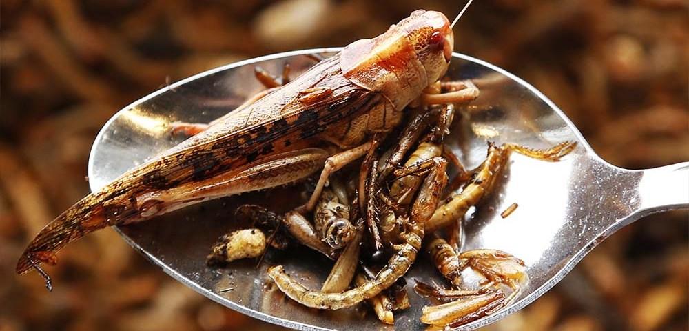 Съедобные насекомые. Часть 2: Саранча, стрекозы, мухи, жуки и скорпионы