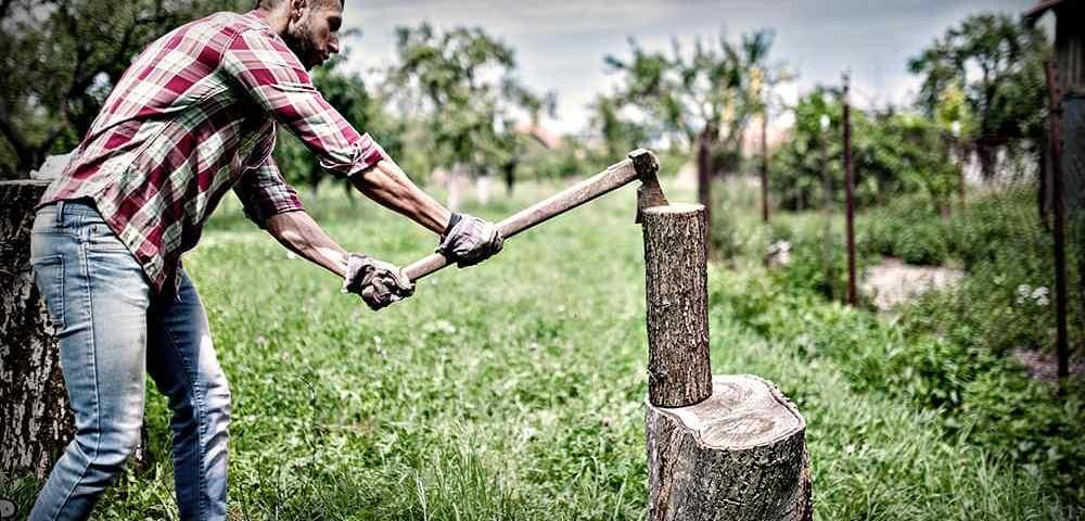 Как правильно выбирать дерево для задач выживания