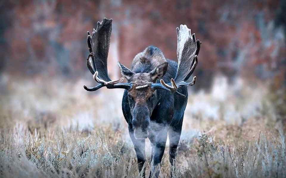 Охота на лося - 10 вещей, которые нужно знать заранее - Last Day Club