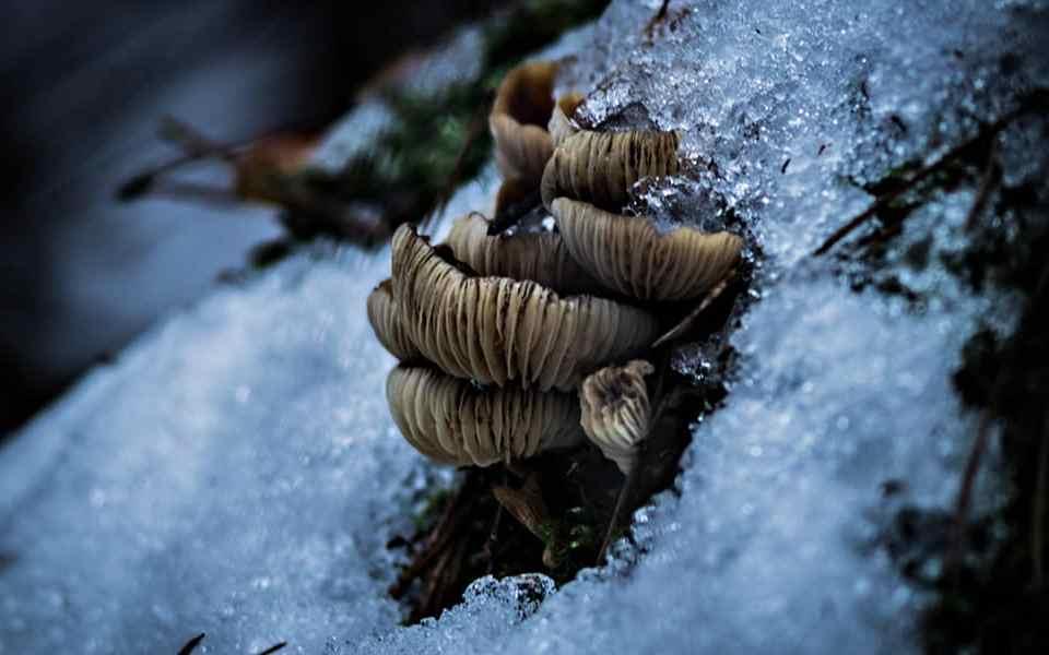 Выжить зимой - Съедобные зимние грибы в лесу - Last Day Club