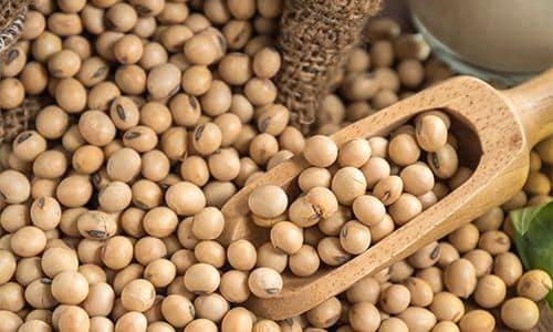 Соевые бобы - Доступные и дешёвые источники белка для запасания на случай ЧС
