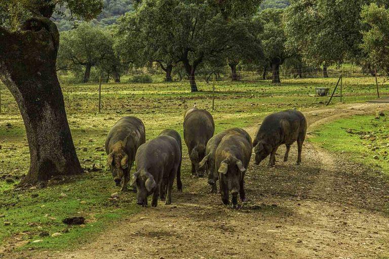 Extremadura, Andalucia, Castilla La Mancha en Castilla Y Leon, ibérica, bob, #bnbjavea, bnbcasaasombrosa