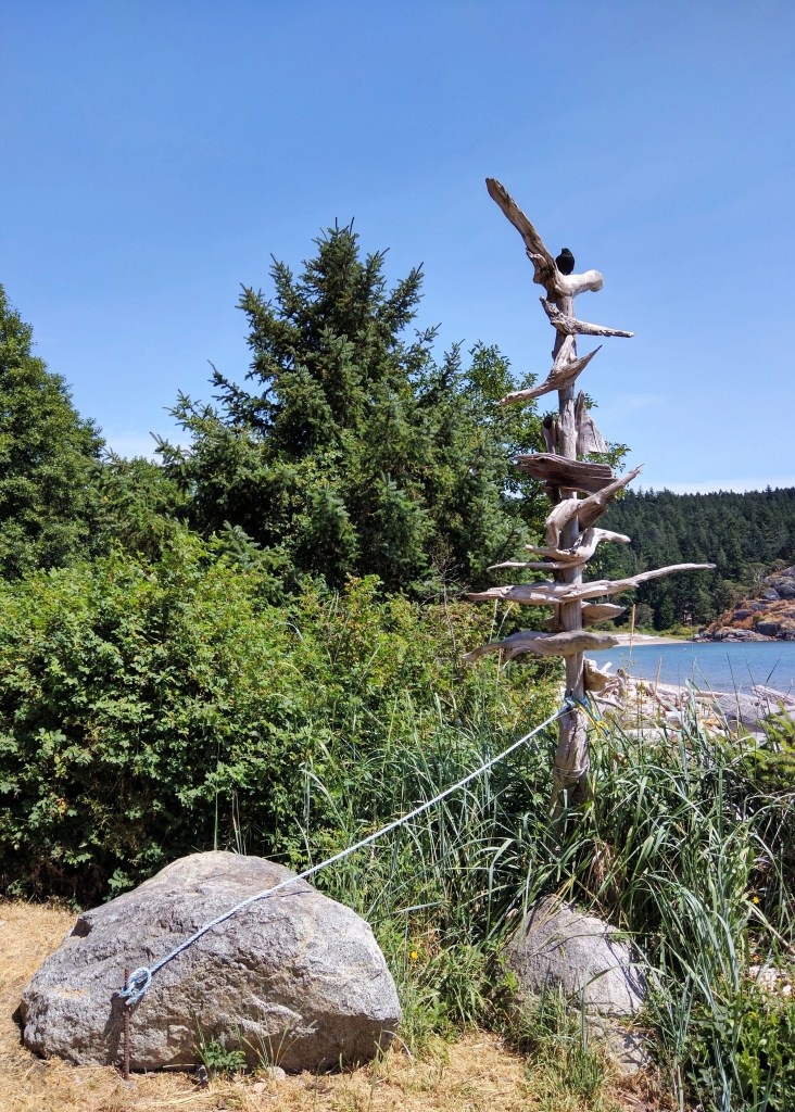 evergreen and driftwood at the beach