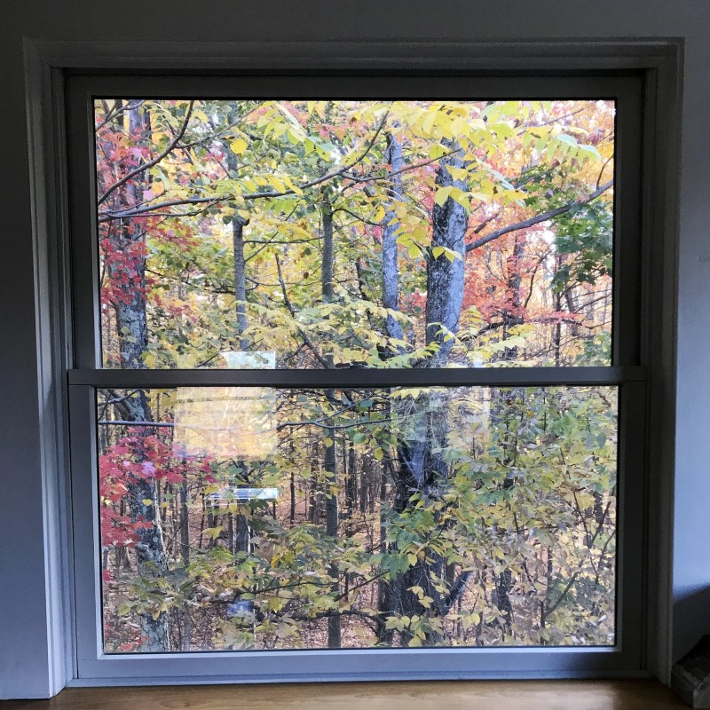 fall leaves out window