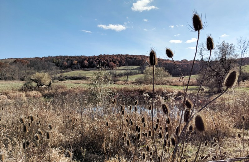 landscape of rolling hills with a pond and cattails