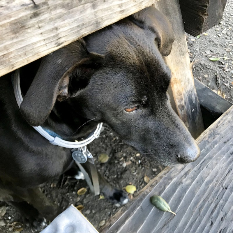 dog under picnic bench at Leo Carrillo State Park