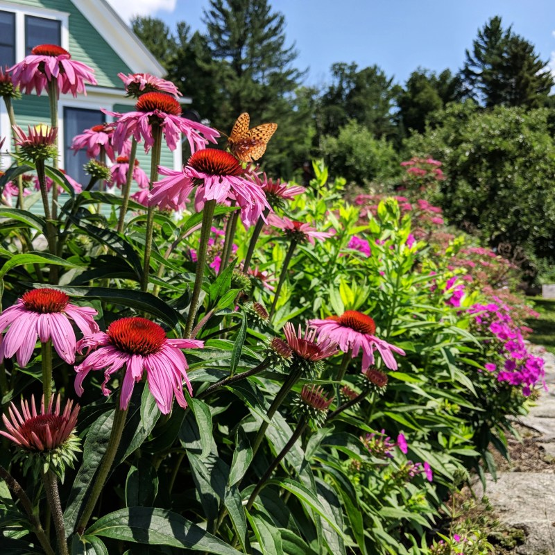 flowers with butterfly at the Cherry Valley Farm Airbnb