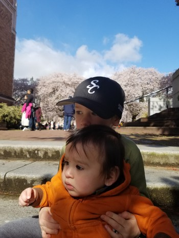 Checking out the cherry blossoms at UW