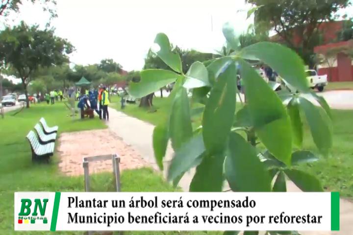 Municipio cruceño compensará con menos impuesto a los vecinos que realicen reforestación