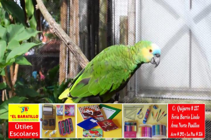 Zoológico Municipal con oferta especial por vacaciones para que niños puedan conocer la fauna del país