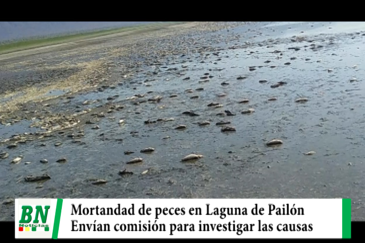 Envían comisión para investigar mortandad de peces en Laguna Concepción de Pailón