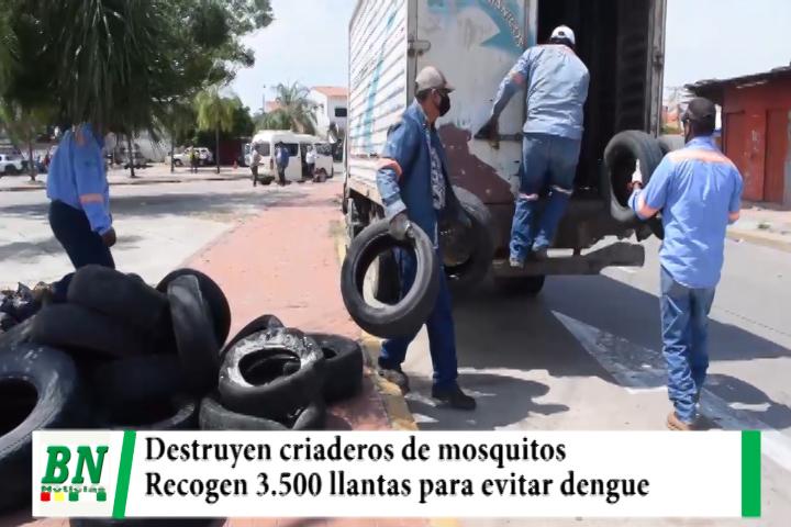 Destruyen criaderos de mosquitos y recogen 3,500 llantas para evitar el dengue