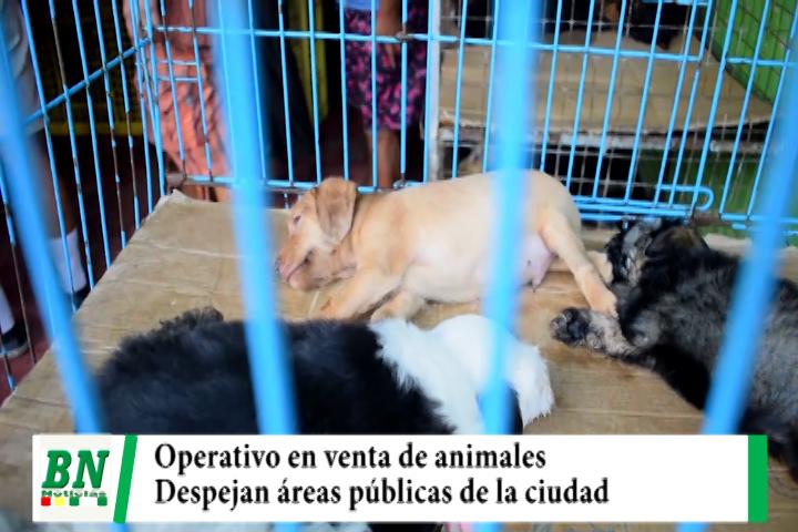 Realizan operativo en áreas públicas y venta de animales por no tener higiene y salubridad
