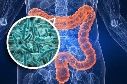 Estudios científicos analizan un posible vínculo entre el COVID-19 y la microbiota