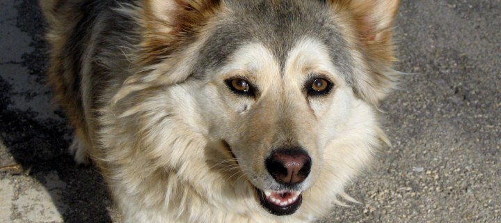 Understanding Your Dog's Vocal Communications