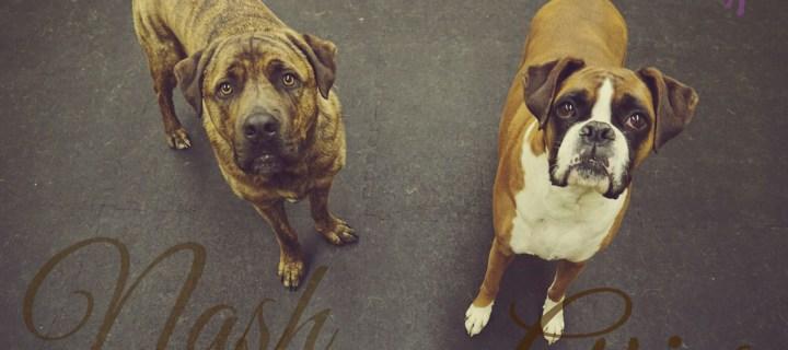 BarksnRec in Trail, BC New Instagram Photo: Nash and Aries. #barksnrec