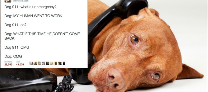 Ever Wonder Why a DOG Would Call 911? These Hilarious Tweets Will Show You! | 22 Words