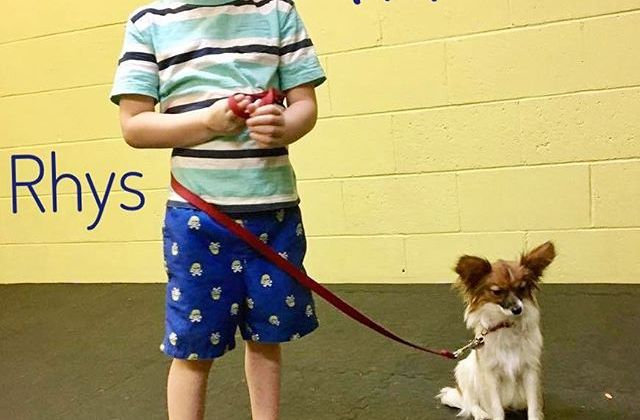 From Barks and Recs Instagram…Puppy Training class was full of fun.  Rhys and his pup,…