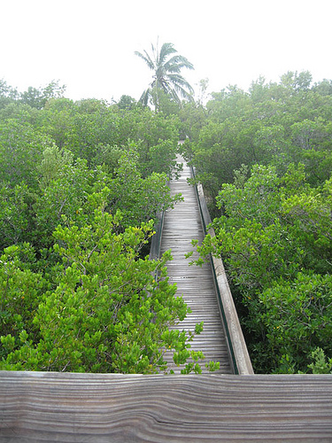 information about the park u0027s ecosystem and wildlife  ranger guided tours are also available  located on county road 905 one quarter mile north of its     dagny johnson key largo hammock botanical state park   boa247    rh   boa247