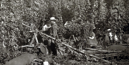 Hop picking in Kent, 1875.