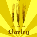 Barley illustration.