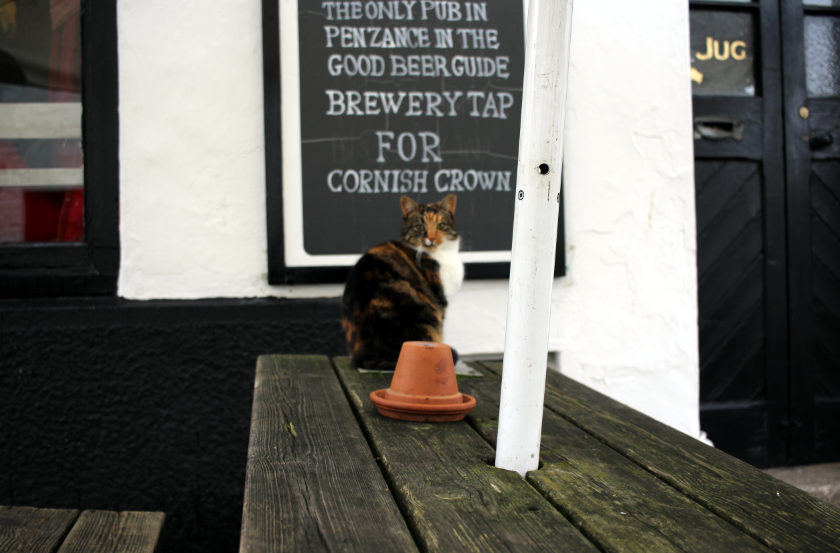 A cat outside the Cornish Crown.