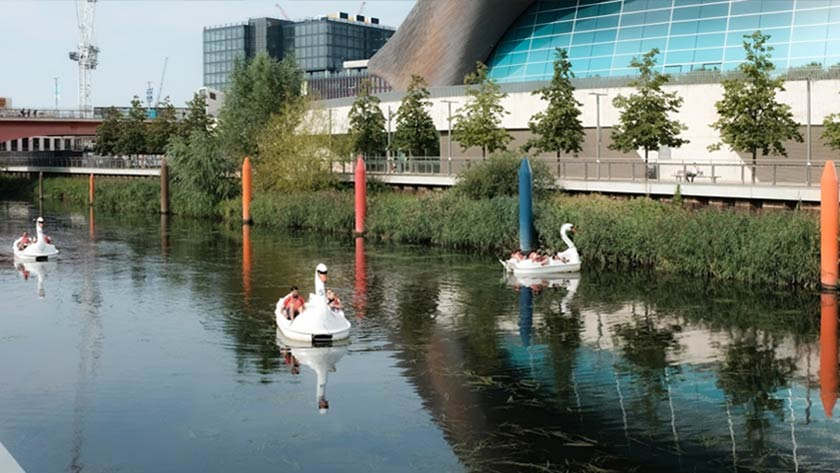 Swans in the Olympic Park.