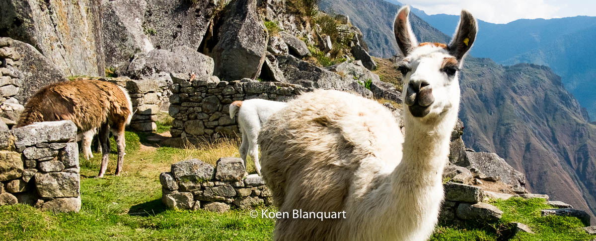 The unexpected sides of Peru