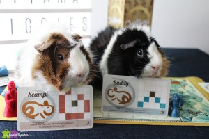 Guinea Pigs with matching Onitama cards