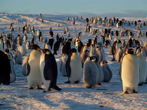 Dobrodružná Antarktída