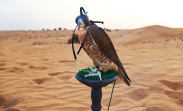 dubai desert animals