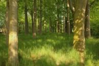 sønderborg denmark forest trees green shade