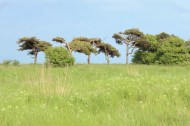 aeroeskoebing denmark sky blue trees