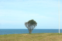 hundested seeland denmark coast tree sky