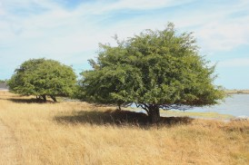 langør denmark samsoe sky summer
